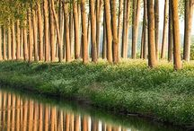water hutan tanah