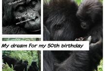 Africa/Gorillas
