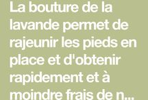 boutures