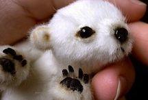 Little cuteness