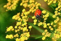 Puutarhan hyödylliset hyönteiset