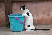 猫の写真 / 猫のいろいろな表情とポーズ