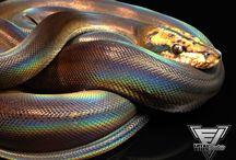 Reticulate Pythons