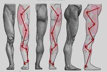 Анатомия и скульптура