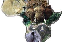 Africa- memories, and dreams