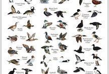 Animal Information Charts