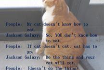 Cat Board / In memory of my cat: Sweet Pea 1997-2013 / by Dibbles
