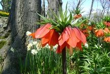 çiçek (flower)