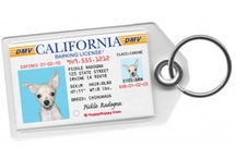 Dog Tags for Dogs