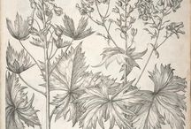 old medical, zoological and botanical drawings / old medical, zooilogical and botanical drawings