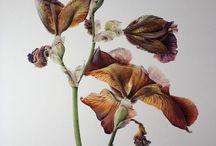 Oriqinal botanikals