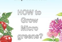 Secrets to Gardening Success / Information for Seed Gardeners!