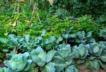 how does ur garden grow / by Jen Nickens