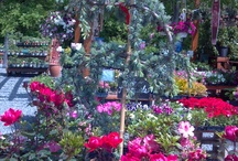 From The Village / The Garden Center at Village Hardware Rock Hall, Maryland / by Sara Lingerman