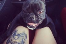 frenchbulldog tatto