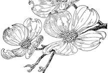 꽃-일러스트