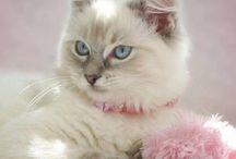 Kattemani / Cute animales