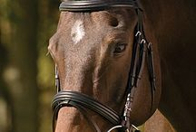 Saddles & Bridles / The best quality leather goods at surprisingly reasonable prices!  You can try our saddles & send them back if they don't work out. Just vet wrap the billets and use a saddle pad.