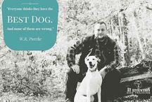 Insta Dogs / Dog Training Philly Pets Philadelphia King of Prussia Pennsylvania