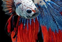 Aquarium fanatics