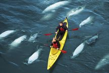 The World Of Kayaking / Cool and inspirational pictures from kayakers all over the globe!