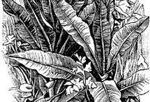 Lyijykynä+kasvit
