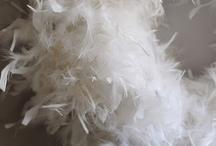 Boa feather