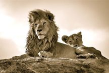 Serengeti National Park / Serengeti National Park Reviews - read traveler reviews for Serengeti National Park Maswa, Serengeti National Park timings, Serengeti National Park opens on, Serengeti National Park entry free hotels near Serengeti National Park, travel packages, recommendations and photos. To know more please log on to - http://www.justorbit.com/africa/tanzania/maswa-98405/serengeti-national-park-33502.html