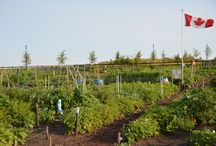 Griesbach - Community Garden