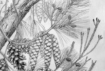 Botanical illustrations by Gábor Emese / Botanical illustrations by Gábor Emese botanikai illusztrációk