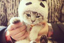 gatos fofos *-*