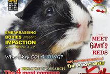 Guinea Pigs in the News