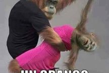 scimmie divertenti