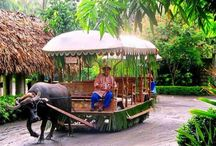 Philippines / by Anke Metzger