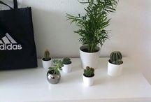 plants;