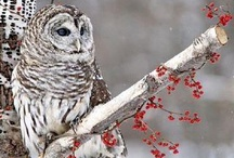 Owls / by Mandi Lopez