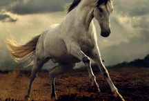 Nature-Horses