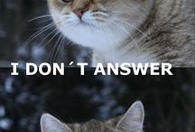 funniest