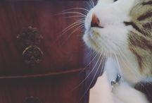 猫のウィンク / cat
