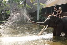 Mason Elephant Park and Lodge
