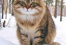 Cat Love / by Sandy Laca