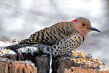 birdalert