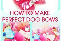 dog bows