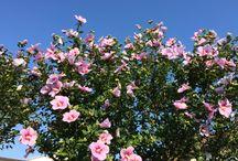 Flower / iPhone で撮影