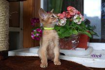 Ура! Снова у нас котята! / Замечательные аби-шкоды ищут новый дом.