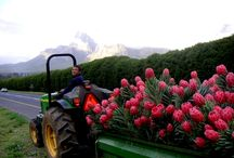 The Michell Tradition / Inspiration from our family-owned farm and hikes in the Western Cape