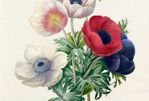 Floral, Flower