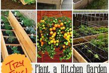 Garden 2016 ideas