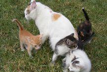 Fizjologia kotów