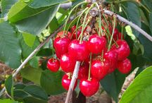 Fruiting Tree Favorites